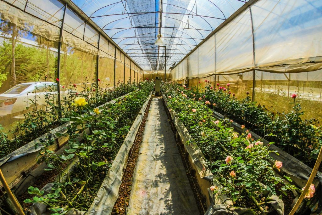 Greenhouses in Iceland | Agriculture in Iceland | Swapp Agency