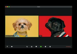 two dogs on a screen looking in opposing directions