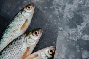 Fish farming in Iceland