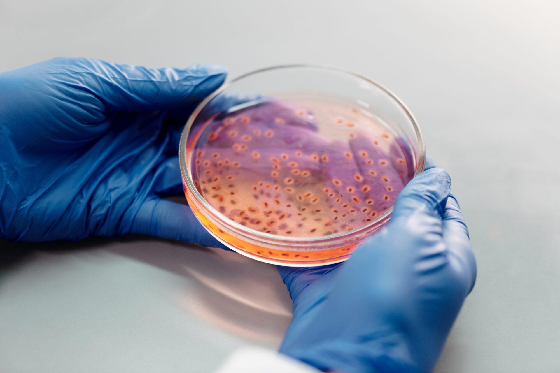 Iceland biotech companies